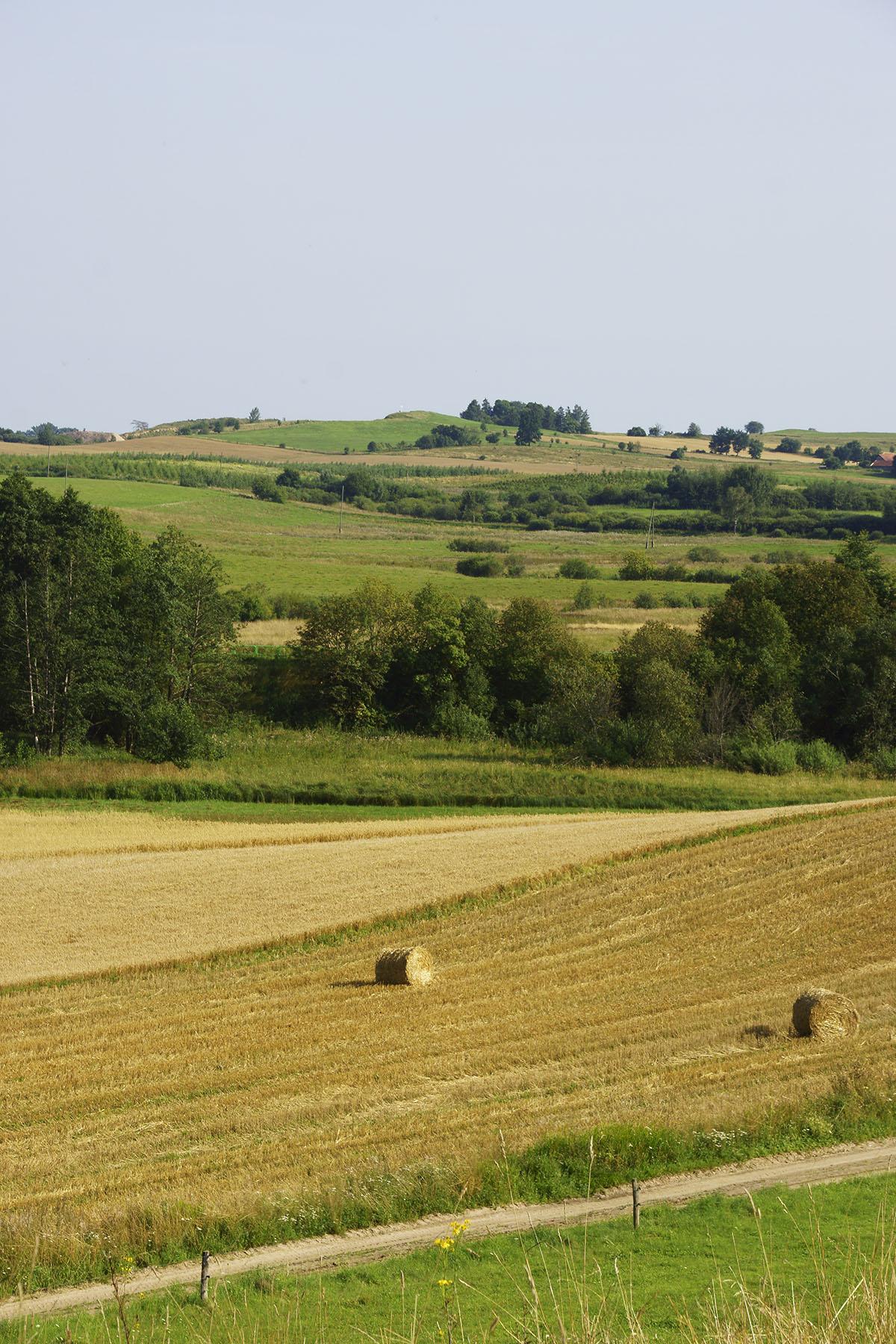 Widok ze Wzgórz Dowiackich w kierunku Brzozowskiej Góry