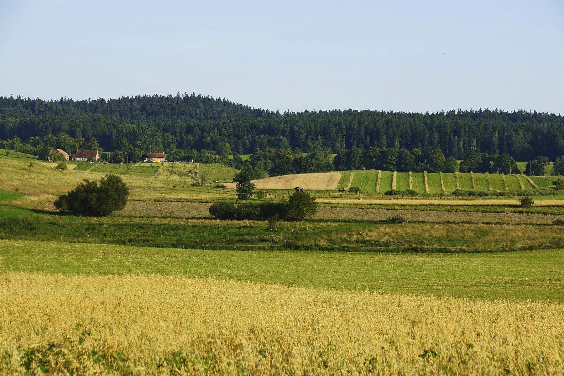 Widok na Wzgórza Piłackie z pagórków na zachód od Piłaków Małych